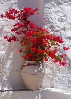Mediterranean planter