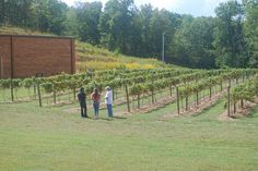 Vineyard Tours & Winery Tours at Natchez Hills Vineyard in Hampshire, TN