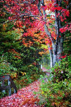 Fall Greetings! on 500px by Prashanth Ramachandra, Halifax, Canada