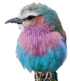 oiseau de toutes les couleurs