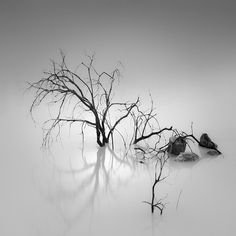 Shade Of Pale, photography by Hengki Koentjoro