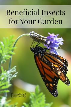 Tips for Attracting Beneficial Insects to Your Garden. Here is a list of beneficial insects that help eliminate harmful pests or help with pollination.