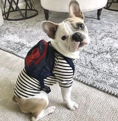 This mini dog backpack features a roomy pocket which is just that extra cargo space needed for all those dog run toys, treats & umm poop baggies. Beagle Puppy, Bulldog Puppies, Dog School, Dog Backpack, Mini Dogs, Puppy Face, Dog Runs, Cute Pugs, Dog Costumes