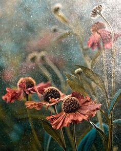 ~~Summer in rain by Magda Wasiczek~~