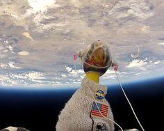 Mercoledì 5 settembre un gruppo di studenti delle scuole superiori della California ha celebrato il 35 ° anniversario del lancio di Voyager 1 in un modo insolito. I ragazzi hanno lanciato in orbita una gallina di gomma. La popolare  mascotte NASA Camilla ha viaggiato all'inizio dell' atmosfera del nostro pianeta a bordo di un pallone di elio suborbitale. Ecco un'istantanea da un'altezza di circa 120.000 metri: