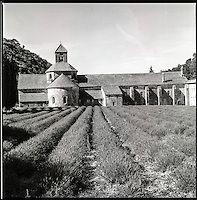 Can you see the beautiful color? Can you smell the flourishing lavender?  Hasselblad 500 cm, Ilford 400 ASA b&w film  Abbey de Sénanque, France.