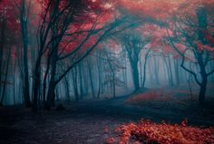 Another day in the mysterious forest by Gilbèrt Papè on 500px