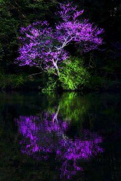 "Simply beautiful world "" Purple Haze"" Purple Love, Shades Of Purple, Purple Stuff, Beautiful World, Beautiful Places, Simply Beautiful, Purple Trees, Purple Flowers, Photos Voyages"