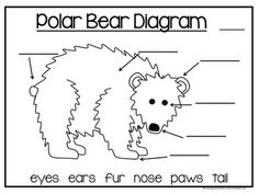 All about polar bears kindergarten ideas pinterest polar bear all about polar bears non fiction writing ccuart Image collections
