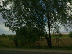 Eğer yola koyulmuşsanız, ağaçlar bile size saygıyla eğilir. Sadece taşıtınızın camından dışarıya bakmanız yeterlidir, ağaçların size saygıyla eğildiğini görmeniz için...