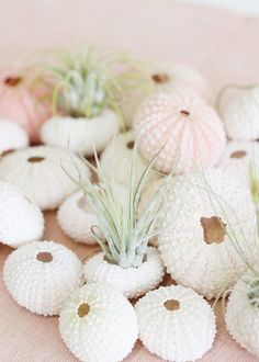 Pack of 24 Natural Urchins Table Scatter- – wedding centerpieces Beach Wedding Tables, Beach Wedding Flowers, Beach Wedding Favors, Nautical Wedding, Coastal Wedding Theme, Bohemian Beach Wedding, Seaside Wedding, Beach Weddings, Romantic Weddings
