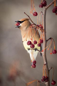 """41+ examples on how to shoot small birds. 
