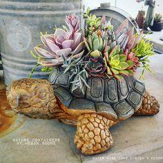 Cute succulent turtle arrangement by Megan Boone