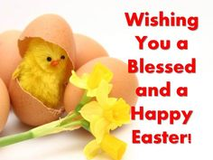 Wishing you a happy Easter easter easter chicks easter quotes easter quote happy easter easter comments Happy Easter Meme, Happy Easter Funny Images, Easter Images Free, Funny Easter Memes, Happy Easter Messages, Easter Pictures, Funny Happy, Funny Memes, Easter Festival