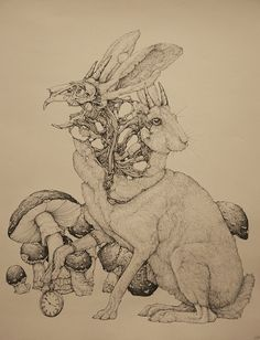 Lauren Marx's Intricate Zoological, Cosmological Drawings