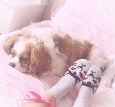 Blush and her puppy, Toby.♡ https://www.youtube.com/watch?v=wDZaVY1tueQ