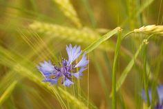 Simplicity in Nature by Robert Sanford via SmugMug