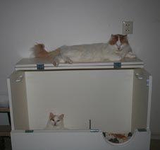 Cattery Aghtermar. Werpkist 90 breed. Kitten nursery