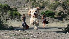 Deze perfect getimede foto's laten honden eruit zien als reuzen(leuk om zelf te proberen!)