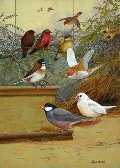 Other Bird Supplies Pet Supplies Canaries Bird Leg Rings 3mm Finches