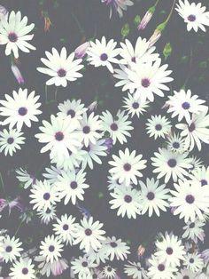 Flores margaritas tumblr - Imagui