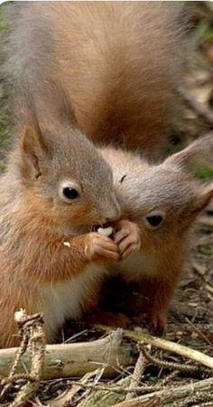 Automne Couleurs Collection meurt Arbre Branche Forêt Animaux Fox Écureuil Hérisson