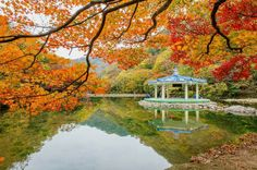CNN made a rating of top 30 most beautiful national parks in the world.  Naejangsan National Park, South Korea