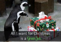 Find your green job on our ECO Job Board. #Canada #green #job #funny #humour #christmas