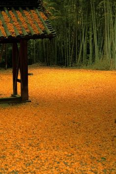 Ginko carpet at Yamazaki Shoten Temple, Kyoto, Japan