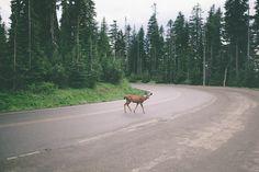 deer crossing ++ photograph : donna muccio
