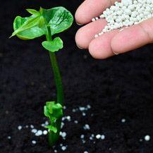 7 Surprising Fertilizers for Your Garden | Handyman Magazine |