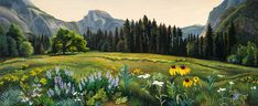 Phyllis Shafer Cook's Meadow, Yosemite National Park, 2013, Oil on Canvas, 14 x 34 inches, Private Collection