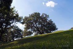 La Colina / The Hill
