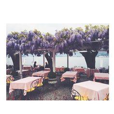 #wisteria season is on #Bellagio #LakeComo