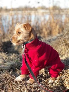 Check Our Ohio Fleece Dog Suit designed by Euro Dog Designs. Loki Clothes, Travelers Rest, Dog Suit, Body Warmer, Dog Wear, Head And Neck, Edd, Dog Design, Winter Coat