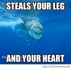 shark memes | Shark Dreams