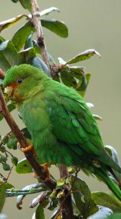 Pretty Birds, Beautiful Birds, Colourful Birds, Parrots, Bird Feathers, Blue Bird, Wildlife, Butterfly, God