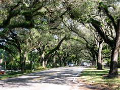 Miami Coconut Grove 2 by Chris OBrien Wicklow, via Flickr