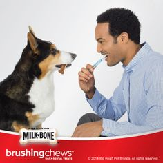 #MilkBoneSweeps: I just entered for a chance to win a #MilkBone gift basket