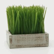 TAG Botanicals Square Potted Wheat Grass - Ordered for entry table. Fake Plants, Artificial Plants, Indoor Plants, Square Planters, Wood Planters, Faux Grass, Wheat Grass, Weathered Wood, Coca Cola