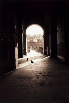Cats outside the Roman Colosseum by Zeb Andrews, via Flickr