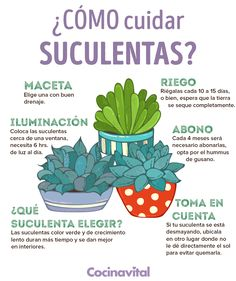 Cómo cuidar suculentas fácilmente en interiores If you love succulents and want to have them inside Eco Garden, Home Vegetable Garden, Green Plants, Cactus Plants, Succulent Plants, Mini Cactus Garden, Planting Succulents, Planting Flowers, Plantation