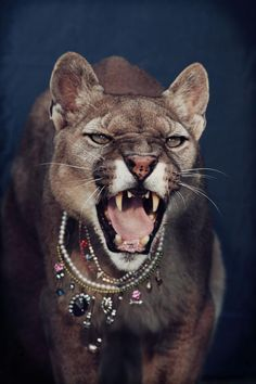 I'd make that face too if someone put that awful jewelry on me.  Poor thing.