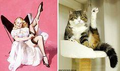 15 chats qui ressemblent à des pin-up