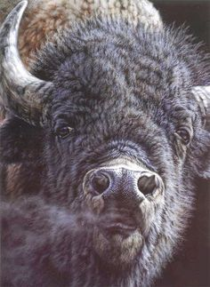 "Items similar to Vivi Crandall ""Bull Rush"" limited edition print on Etsy Buffalo S, Buffalo Animal, Amazing Beasts, Magnificent Beasts, Native American Baby, American Bison, Buffalo Pictures, Buffalo Painting, Duck Art"