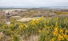 UK's first 'super' national nature reserve created in Dorset | Environment | The Guardian