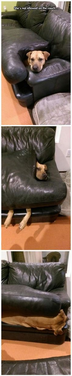 So, technically..... she isn't breaking the rules...#funny #dogs