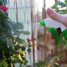 Najlepszy naturalny preparat roślinny