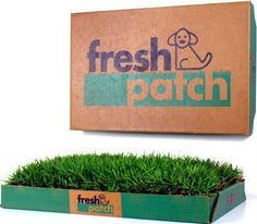Fresh Patch is the official real grass dog potty and training website. Find out why so many prefer real vs artificial dog grass.-- AS SEEN ON SHARK TANK -- Potty Training Puppy Apartment, Indoor Dog Potty, Dog Training Pads, Shark Tank, Doge, Puppy Love, Happy Puppy, Pet Supplies, Patches