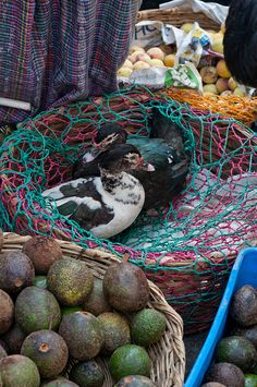 Ducks for sale in a market - so sad. These creatures are sold as produce, but look how afraid they are. I eat less and less meat each year. No wonder.